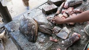 Frischer Fisch in Kilwa Masoko