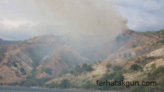 Waldbrand waehrend der Reise