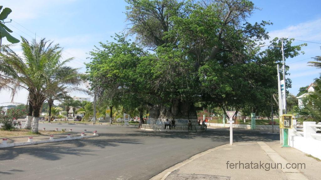 mahajanga-baobab
