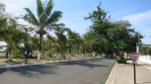 mahajanga-palmen
