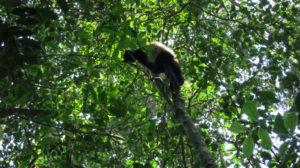 ranomafana-lemur-5