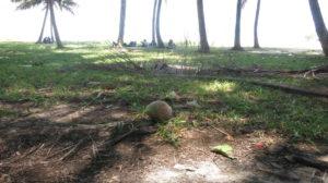 Toamasina - Chille unter Palmen