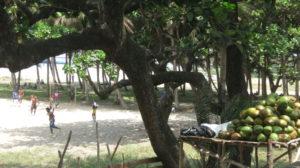Toamasina - Frische Kokosnüsse