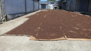 Toamasina - Nelken trocknen in der Sonne