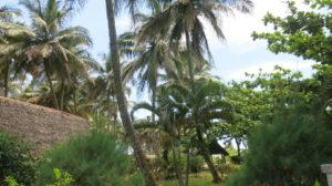 Toamasina - Palmen Hotel Marotia