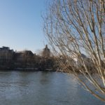 seine white tree
