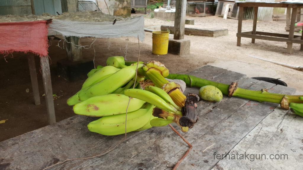 Coronie Totness Friendship - Bananen Verarbeitung Babynahrung