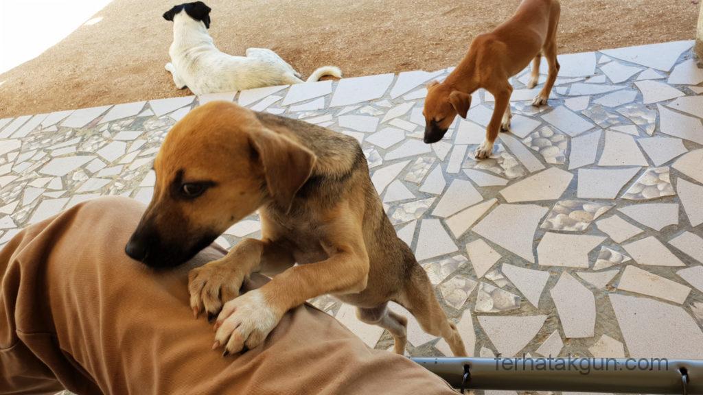 Coronie Totness Friendship - Hunde