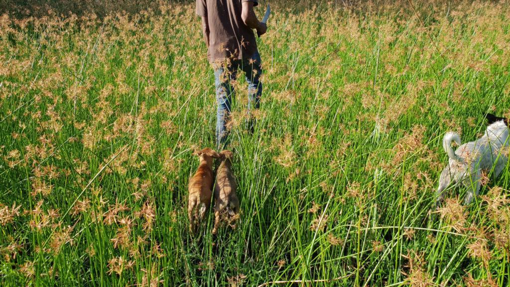Coronie Totness Friendship - Mit den Hunden