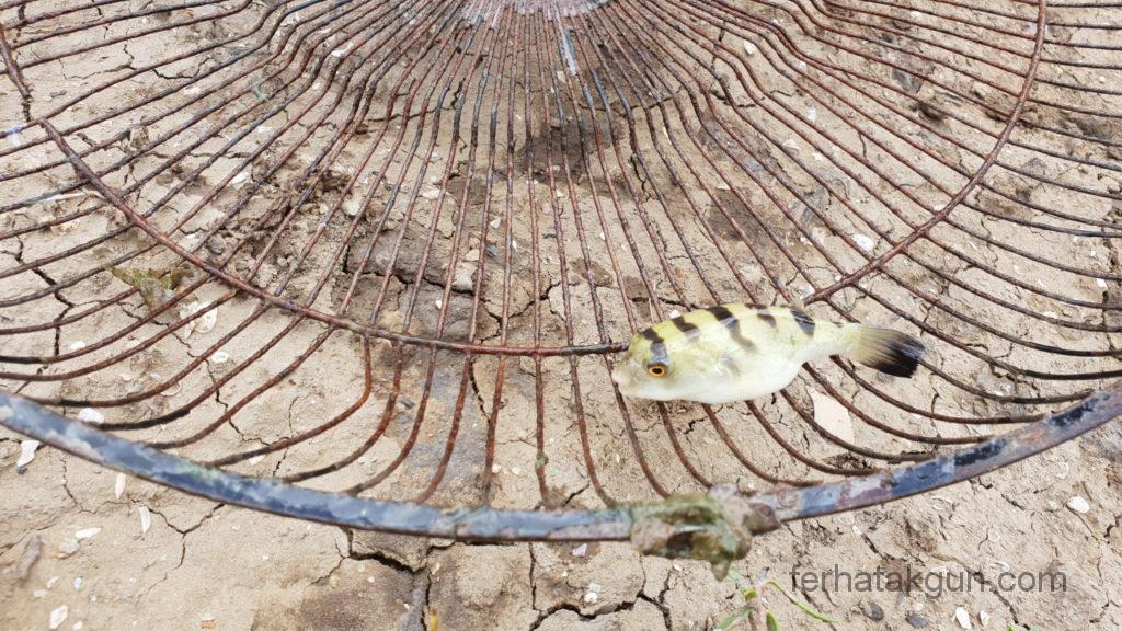Coronie Totness Friendship - Beifang Fisch