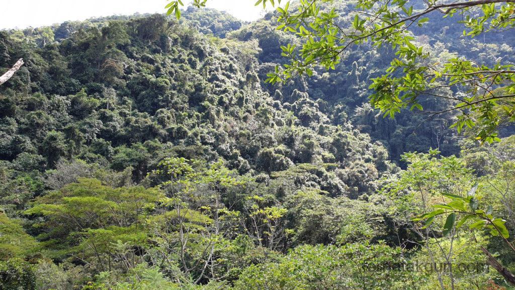 Cascada de Juan Curi - Wald