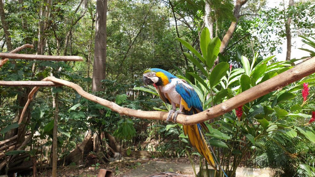 El Gallineral - Kranker Papagei