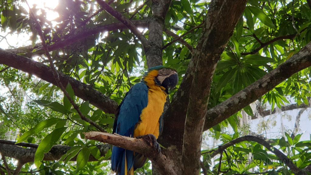 El Gallineral - Papagei