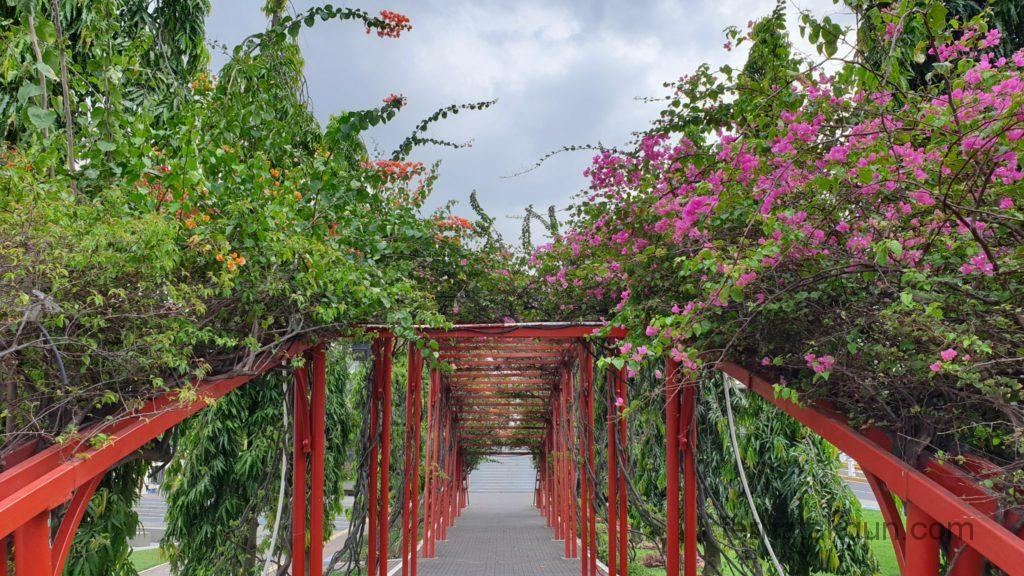 Panama City - Holzbrücke mit Blumen