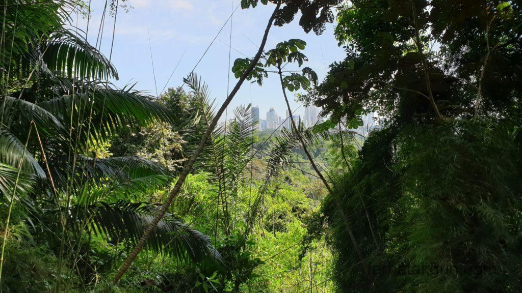 Parque Natural Metropolitano - Aussicht