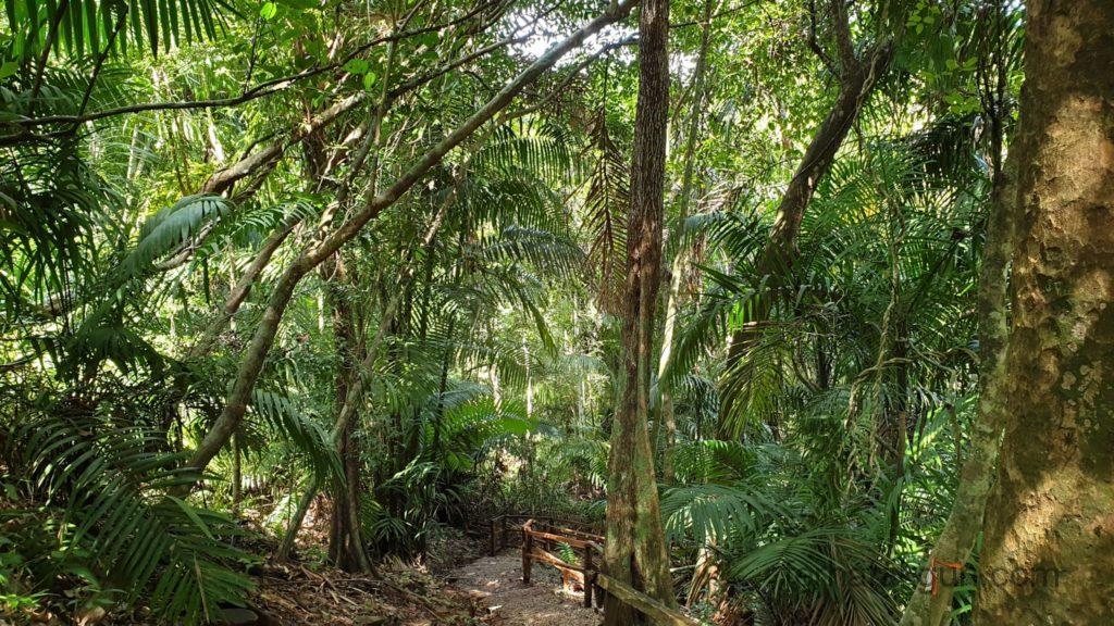Parque Natural Metropolitano - Wald